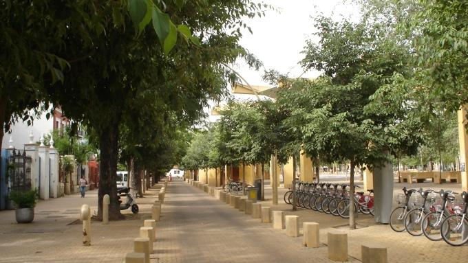 Alameda de h rcules jardines sin fronteras - Jardines de hercules sevilla ...