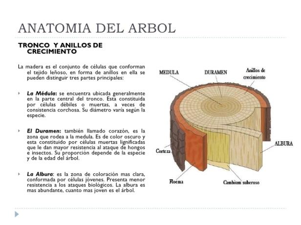 anatomia-de-un-arbol-a