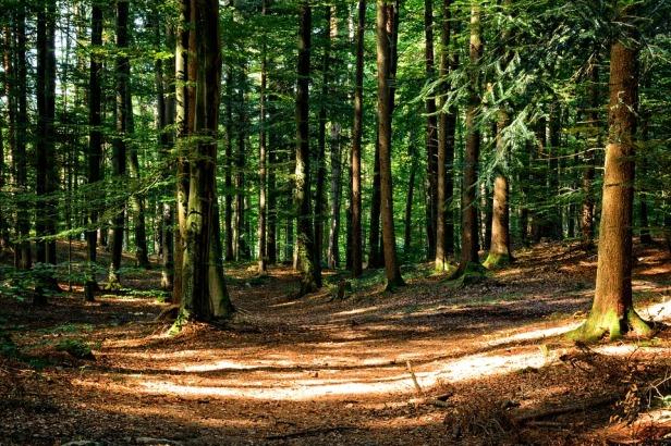 bosques-a