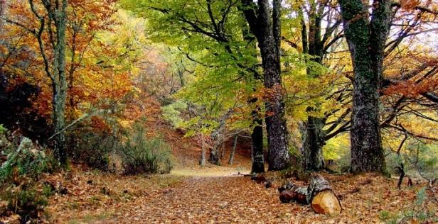bosques-hayedo-de-montejo-madrid1