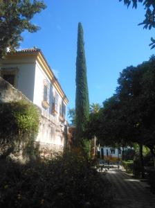 cipres-jardines-de-murillo