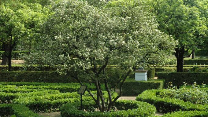 citrus-mirtjifolia-1
