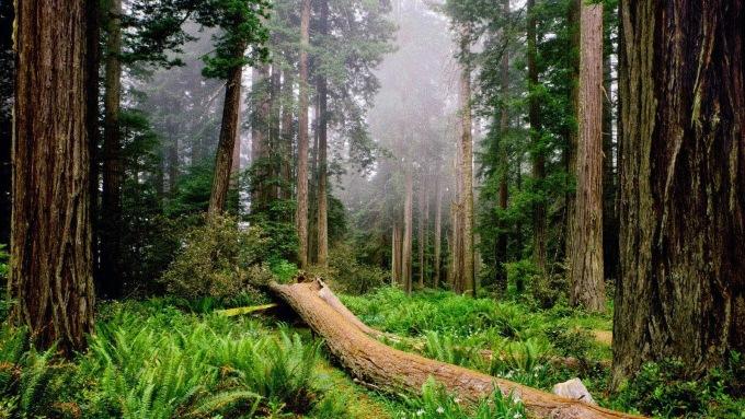 clima-bosque-2