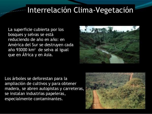 clima-conversatorio-bosques-para-el-buen-vivir-maracay-estado-aragua-venezuela-28-638