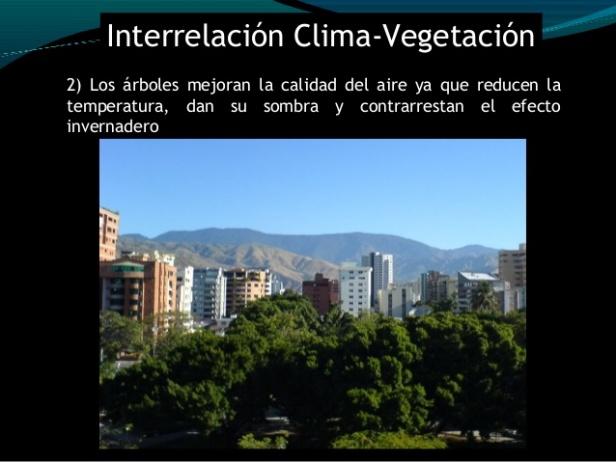 clima-conversatorio-bosques-para-el-buen-vivir-maracay-estado-aragua-venezuela-39-638
