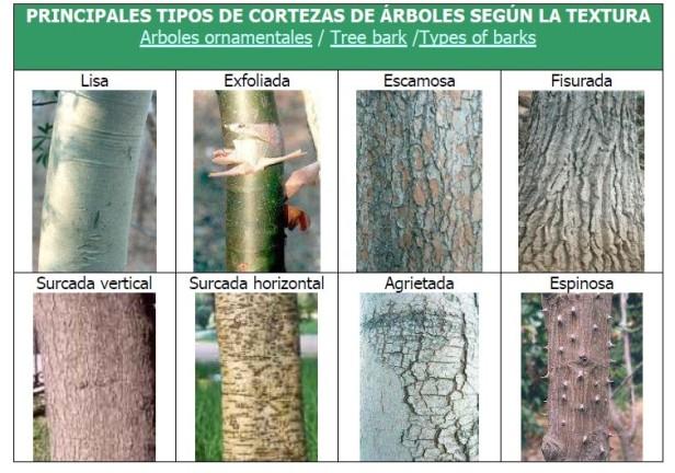 cortezas-arboles