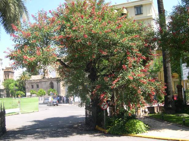 erythrina-crista-galli-hotel-099-3-c1