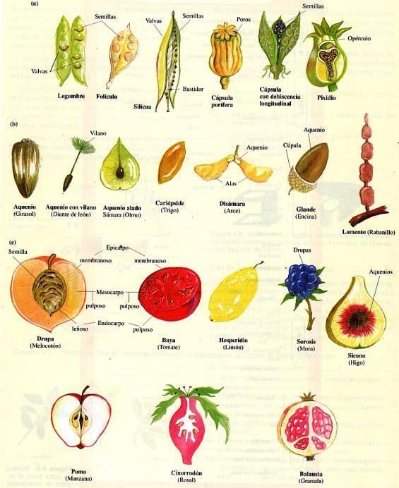 frutos-10