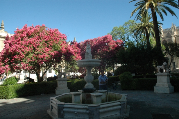 jardines-d-la-lonja-julio-3