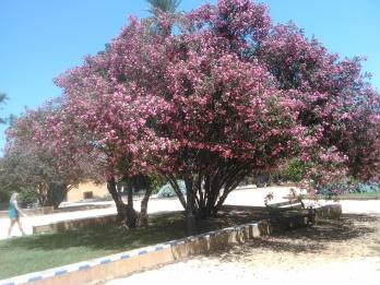 jardines-de-catalina-de-ribera-julio-2016-090