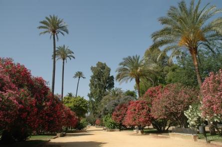 jardines-de-catalina-de-rivera-y-murillo-037