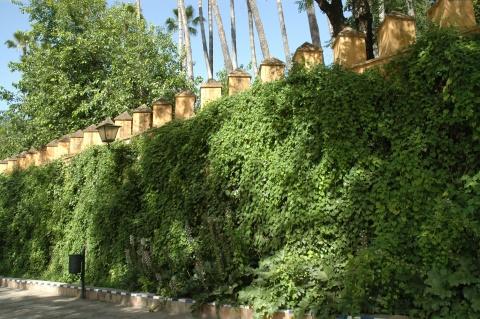 jardines-de-catalina-de-rivera-y-murillo-038
