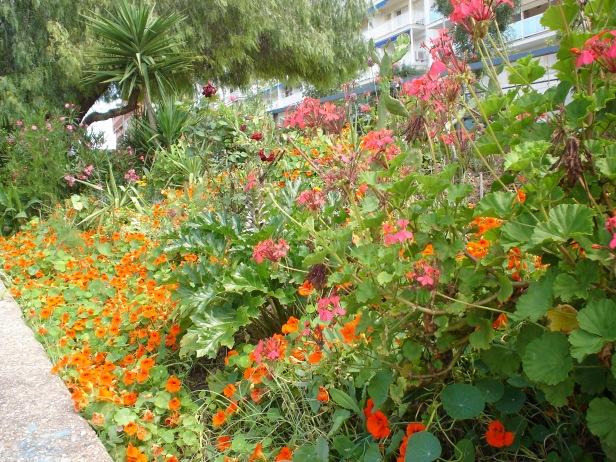 jardines-de-chapina-2015-antes-de-su-desaparicion