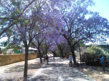 jardines-de-chapina-620