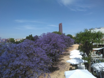 jardines-de-chapina-842