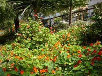 jardines-de-chapina-z2