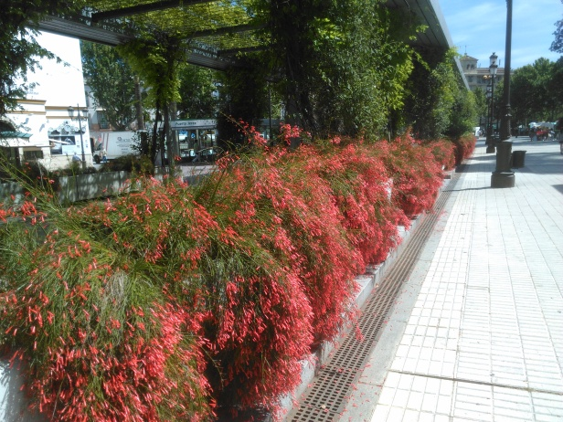 jardines-de-cristina-h841