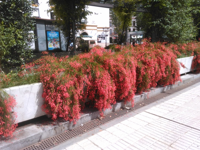 jardines-de-cristina_106