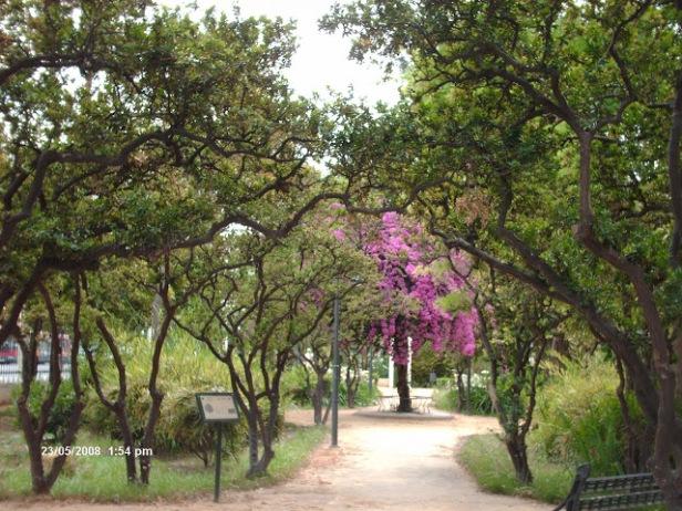 jardines-de-las-delicias-jardin
