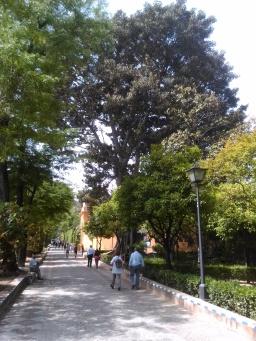 jardines-de-murillo-040