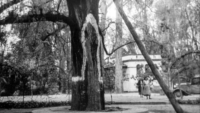 jardines-de-san-telmo-ku-2