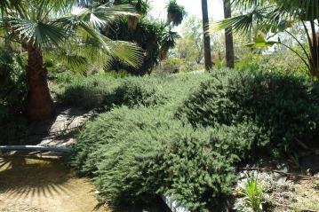 jardines-de-san-telmo-rosmarinus-officinalis-var-postratus