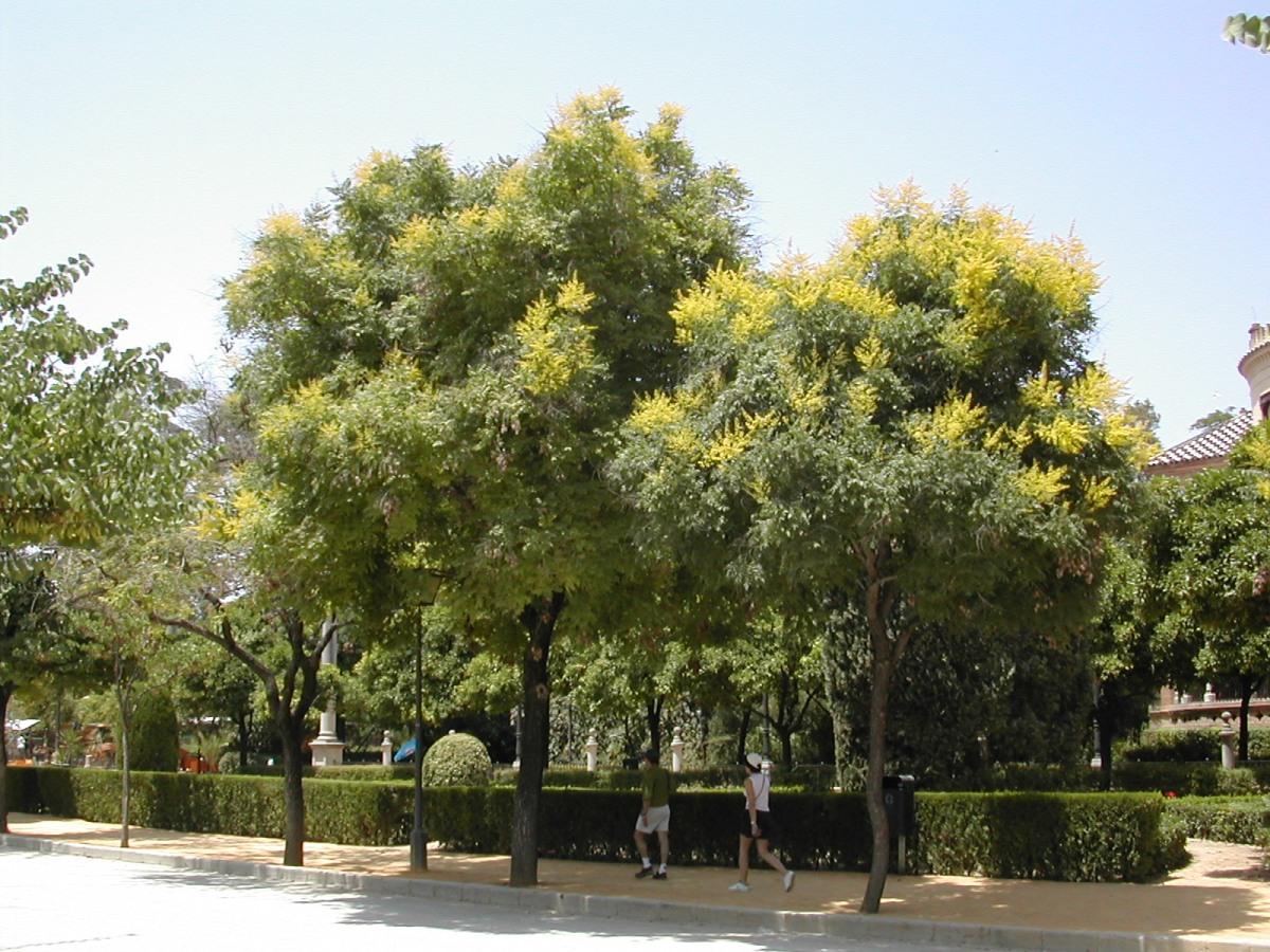 El cuidado de los rboles de la ciudad jardines sin for Arboles de jardin