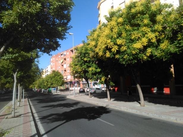 koelreuteria-paniculata-sevilla-junio-2016-095