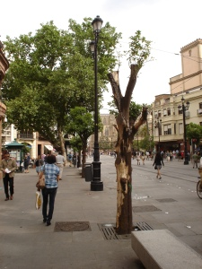 naranjos-avenida