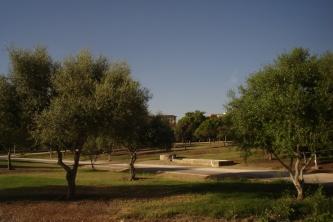 nous-parcs-parque-del-tamarguillo-acebuches-012