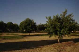 nous-parcs-parque-del-tamarguillo-algarrobos-005-2