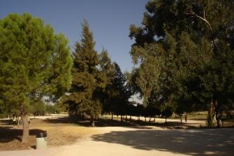 nous-parcs-parque-del-tamarguillo-casuarinas-047
