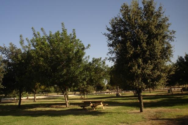 nous-parcs-parque-del-tamarguillo-encinas-y-algarrobos-036-2
