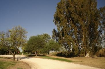 nous-parcs-parque-del-tamarguillo-eucalipto-017-2