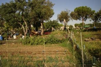 nous-parcs-parque-del-tamarguillo-huertos-familiares-039