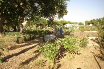 nous-parcs-parque-del-tamarguillo-huertos-familiares-040-2