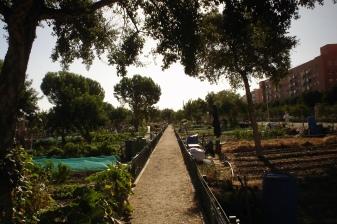 nous-parcs-parque-del-tamarguillo-huertos-familiares-057-2