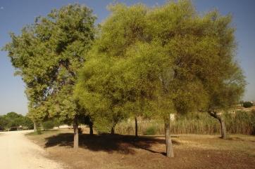 nous-parcs-parque-del-tamarguillo-mimosas-013-2