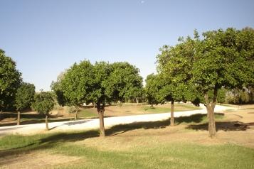 nous-parcs-parque-del-tamarguillo-naranjo-amargo-019