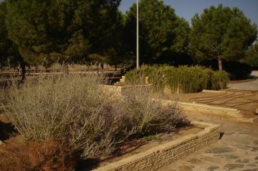 nous-parcs-parque-del-tamarguillo-perovskia-atriplicifolia-salvia-rusa-052