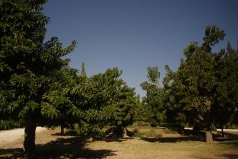 nous-parcs-parque-del-tamarguillo-phytolaca-dioica-068