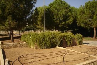 nous-parcs-parque-del-tamarguillo-romero-rastrero-051