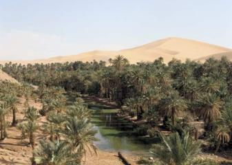 oasis-algerian-sahara
