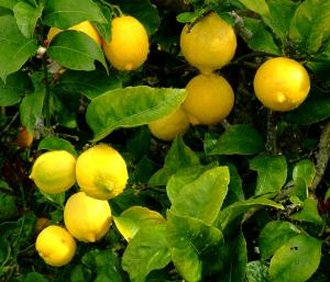 oscar-tintori-lemon