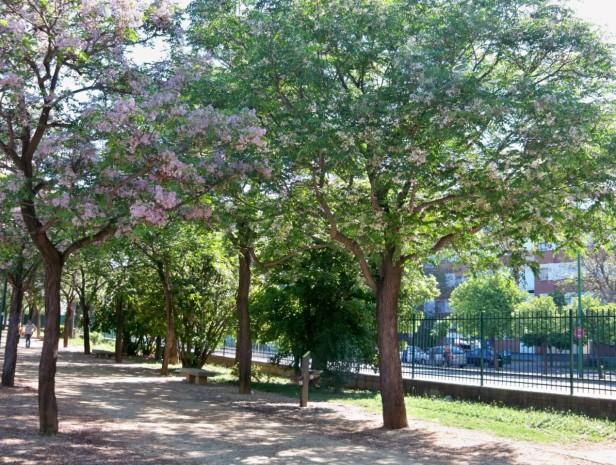 parac3adsos-en-el-paseo-perimetral-del-parque-josc3a9-celestino-mutis