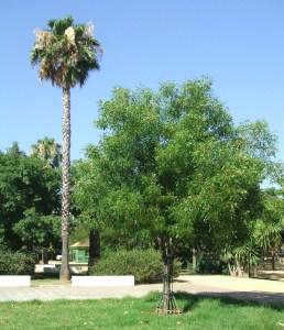 parque-celestino-mutis-4caobo