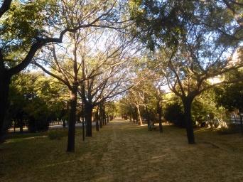 parque-celestino-mutis-sept-2015-175