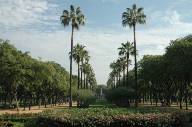 parque-de-amate-012-washingtonia-robusta-1_redimensionar