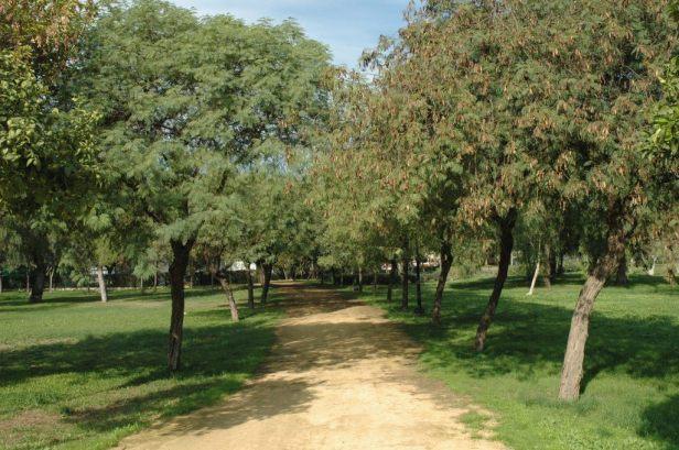 parque-de-amate-022-albizias