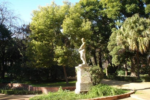 parque-de-maria-luisa-cinammomum-camphora